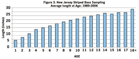 Fish tagged in the Navesink River from 1989 to 2000 generally followed a different pattern with over 76 percent recaptured in New Jersey waters (Figure 2).
