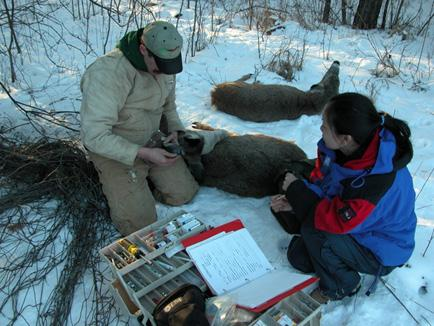 Challenges Deer management must be based on clearly articulated outcomes, sound science and informed policy decisions.