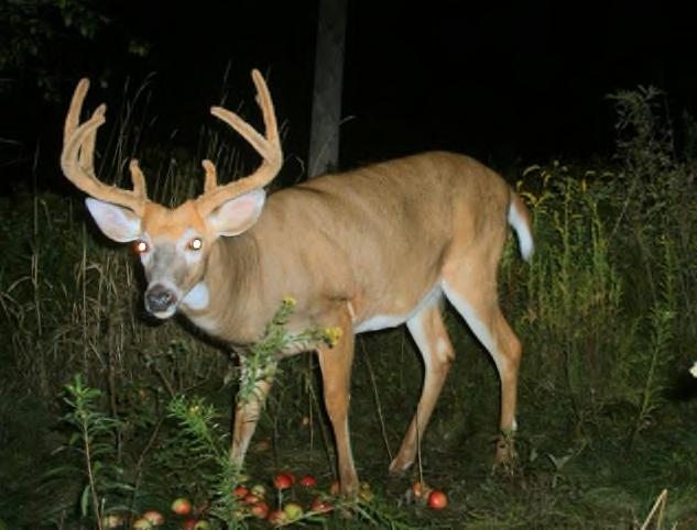 with assessments of deer abundance, monitoring of deer behavior, assessment of ecological outcomes, and a science support program using harvested deer to enhance other Cornell research.
