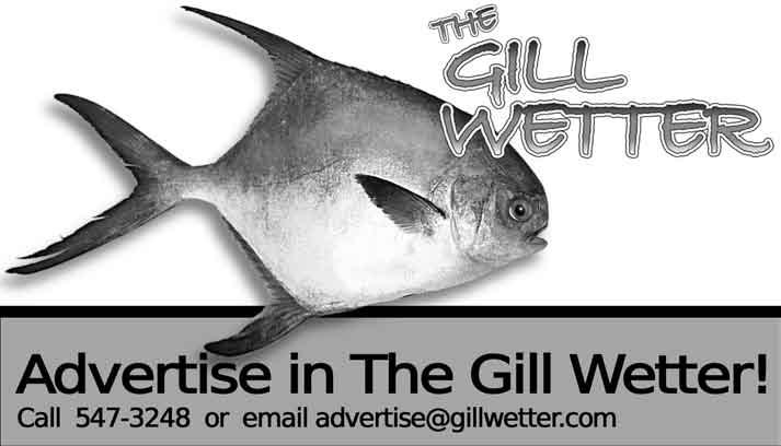 The Gill Wetter www.gillwetter.com November 15, 2005 page 10 Gray Trout by Capt. Matt Wirt Gray trout, weakfish, or sea trout, there are many names for this species. I call them day savers.