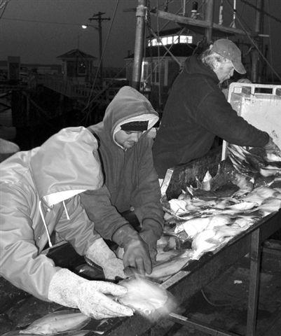 Northeast Seafood Coalition Mission * Work for the long term health of fishery resources, fishing communities, and the fishing industry throughout the northeast.