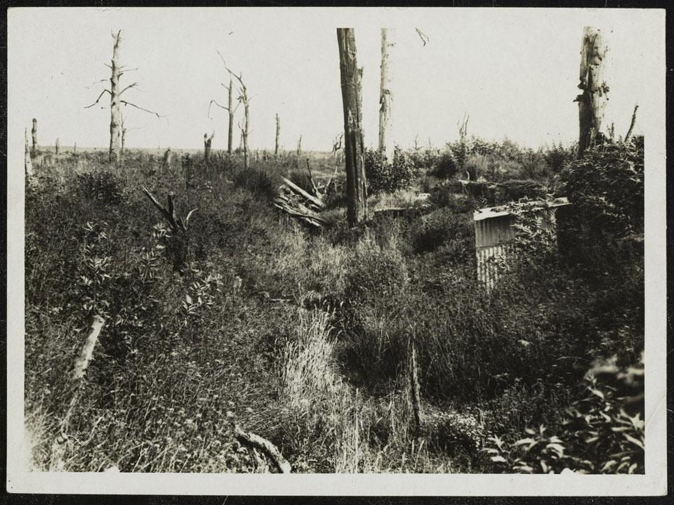 16 P a g e Trones Wood in 1916: And the same scene a year