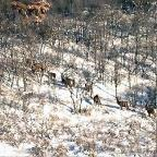 HUNT ID: 5074-G-L-1395-ElkMDeer-CO-521-ON2IAPA-TSMA3NHUN-1JB-Cabin or Drop Camp With a higher than average success rate, an outfitter with a top notch set of experienced guides and a