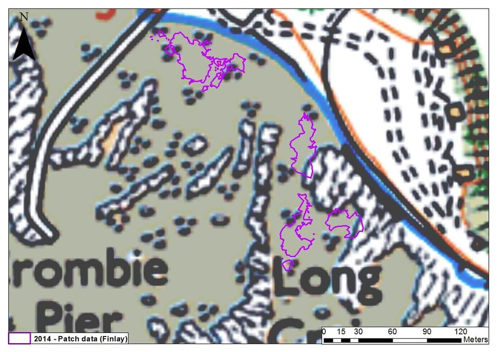 Figure 40: Seagrass bed extent during 2014 at Ironmill Bay as surveyed by Finlay (2014) Finlay discovered that total Zostera spp.
