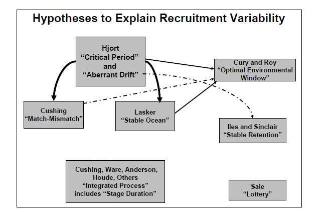 Recruitment Hypotheses Recruitment variability can result from numerous processes operating on different time and space scales and represents and integrated process acting