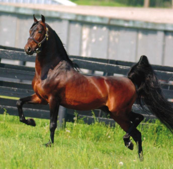 Park Harness) and he s been a stallion who took charge of the breeding landscape for his generation.