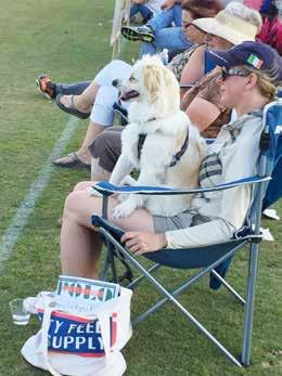Rating Totals This year and a half pooch named Cordi was attending his first polo game yesterday in the final of the