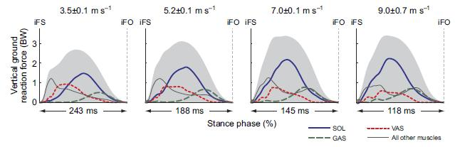 Figure 5 Individual muscle joint torques for each speed. (Dorn et al., 2012) Figure 6. Net Vertical ground reaction forces (shaded). (Dorn et al., 2012) Stride frequency continues to increase velocity once maximal stride length has been achieved, usually around 7.