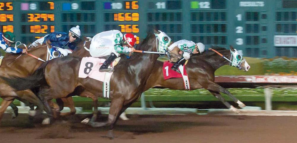 REMEMBE SCOTT MARTINEZ Remembering Spence noses out Perrys Affair. Remembering Spence comes home in the Los Al Winter Derby. By Andrea Caudill Watch the Los Alamitos Winter Derby!