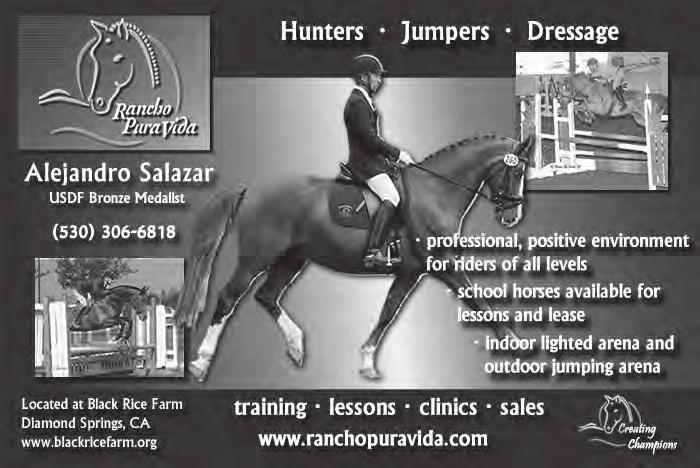 25K. Pleasanton kellrusso21@gmail.com 949/682-6527 LEO is a 2008, 18H, beautiful bay gelding who is currently schooling second level dressage with potential for more. Gaits are easy to sit.