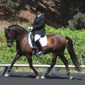 CLASSIFIEDS CLASSIFIEDS HORSES HORSES HORSES WINNING FEI 9 year old mare Love Potion. Showing I1, schooling GP. Suitable for amateur or professional. In training with Hilda Gurney. https://www.