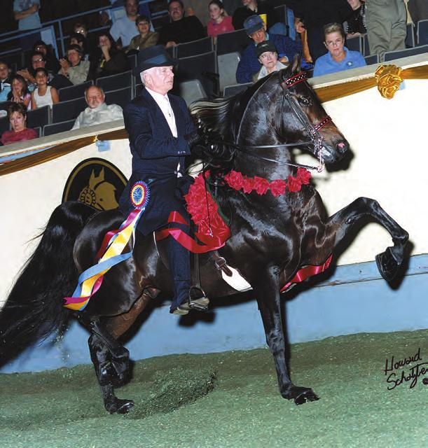 10. STAND AND DELIVER GCH (Queens Vanity Flair x NBN At Your Command by Carlyle Command) Stand And Deliver has been a notable athlete in both the park saddle and park harness divisions demonstrating